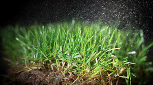 Scientists unlock 'green' energy from garden grass