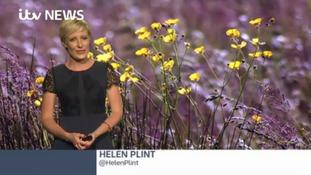 Helen Plint