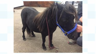 Poorly pony found with cuts and wounds at a coal yard in Barnsley