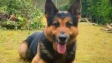 Police dog breaks neck chasing suspected thieves