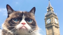 Grumpy Cat pictured by Big Ben in central London