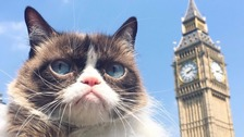 Grumpy Cat takes in the sights of London and looks unimpressed
