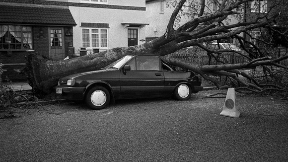 A car stands crushed from a falling tree after the hurricane