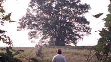 The tree has become iconic through its appearance in the film