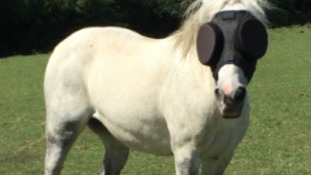 Pony gets life-saving sunglasses back thanks to public donations