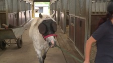 Pony gets life-saving sunglasses thanks to public donations