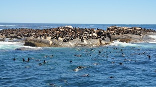 Seal island, Hout Bay
