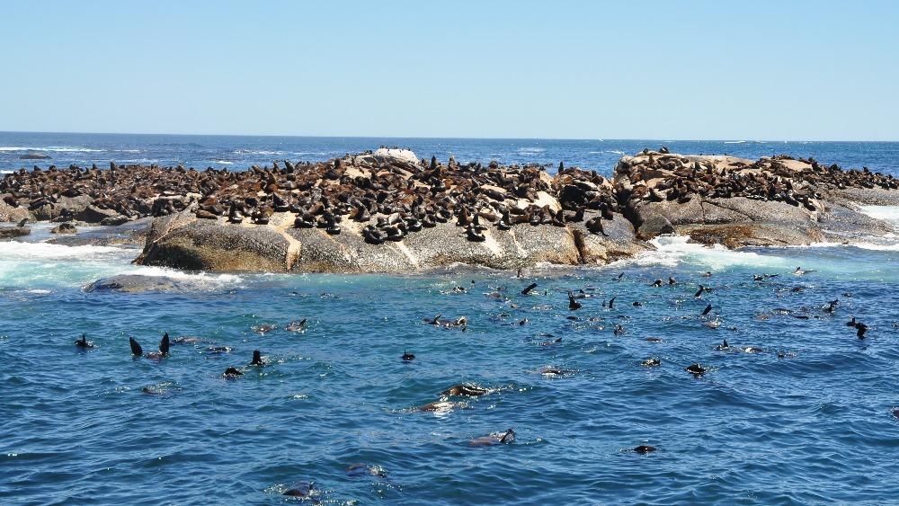 Seal Island Uk