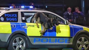 Police Dog Lester chased down one of the suspects, aged 17, as he attempted to run away across school grounds.