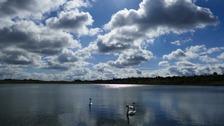 Yaxley swans