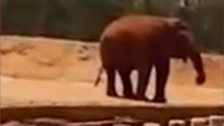 Girl, 7, killed after elephant throws a rock at her head