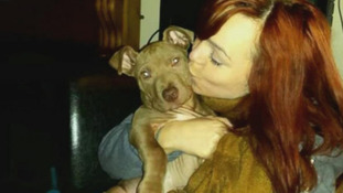 Hank is a much-loved family pet, but was seized from his home in east Belfast.