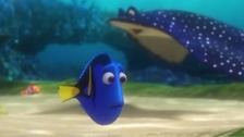 Don't buy Dory say Plymouth's aquarium