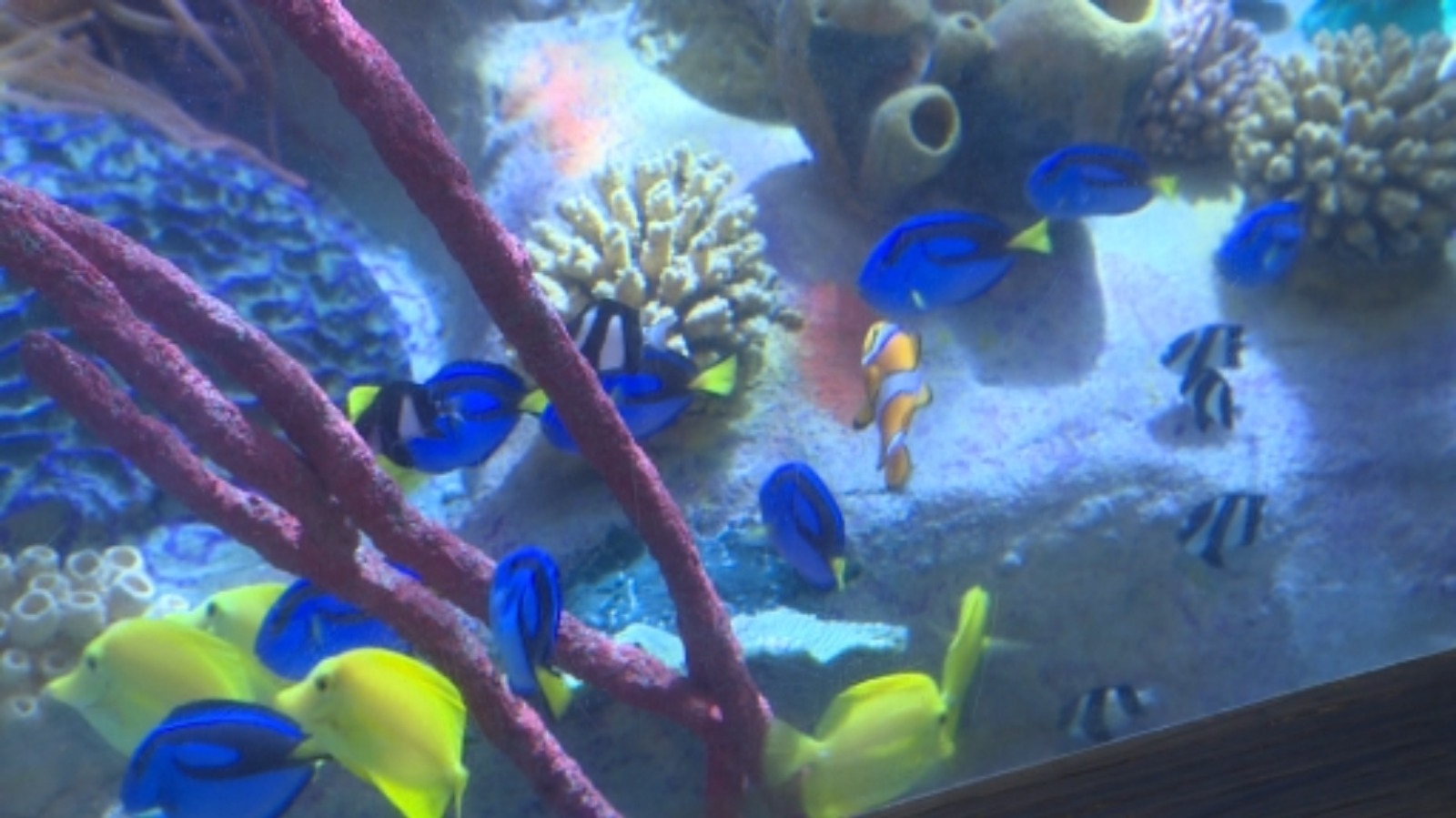Dont buy Dory say Plymouths aquarium West Country - ITV News