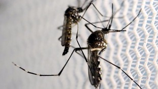 First 'homegrown' mosquito Zika transmissions on US mainland