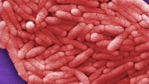 Pet Food Recalls: Explosion of Salmonella Cases in Past 5 Years