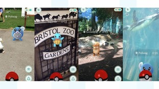Bristol Zoo Pokemon Go event