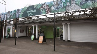 The children were on an end of term trip to London Zoo