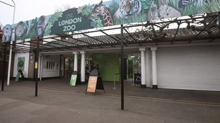 Schoolchildren 'spit on animals' and pupil left unconscious during London Zoo trip
