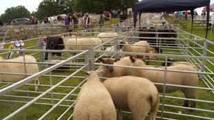 Plenty of livestock was on display