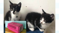 The kittens were found abandoned at the side of a road in Stourport-on-Severn