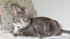 Prince Smokey could be given the accolade of National Cat of the Year later today.