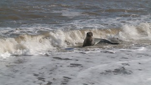 A seal enjoying The Wash Approach.