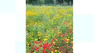 A mixture of seeds are used to grow the meadows.