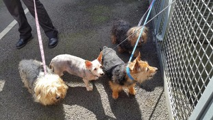 Rescue centre's appeal after dogs abandoned at stable