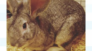 Owner 'broken-hearted' after rabbits suffer broken legs