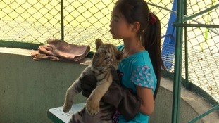 One of the lethargic looking tiger cubs handed out for photo opportunities.