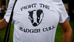 Protests over the badger cull