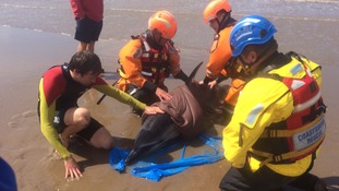 RNLI lifeguards called to the aid of stranded dolphin