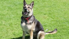 Reo was due to be euthanised but is now fighting fit