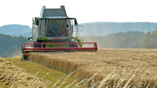 Cmbine Harvester