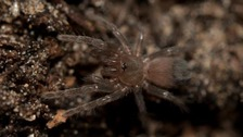 The clutch of about 200 rare and unusual tarantulas has hatched at Chester Zoo