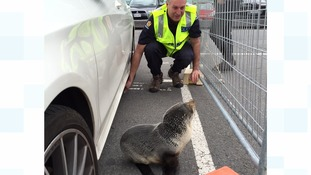 Seal pup 'arrested' for trespassing at New Zealand police station