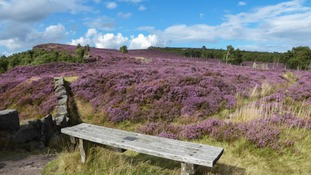 Seat with Heather at Millstone Edge MICHAEL HARDY