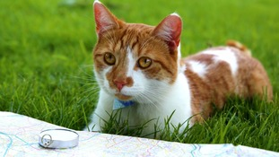 Henry the cat has turned his paws to 50 things to do before you're 11