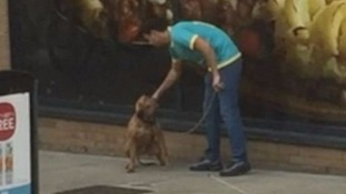 Man filmed punching dog outside supermarket in Islington