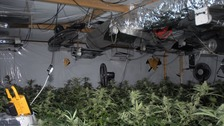 Cannabis factory discovered in industrial unit