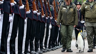 Uniformed soldiers of the King of Norway's Guard parade for inspection by their mascot, king penguin Brigadier Sir Nils Olav.