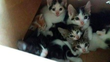 The Olympic kittens taken in by Sheffield Cats Shelter