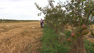 Stephen Briggs and wife Lynn can  pick apples as they inspect the crops