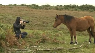 New Forest photographer wins distinction