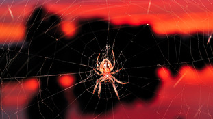 'Superlens' possible with spider silk: Bangor University