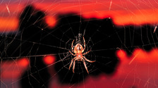 'Superlens' helped by spider silk: Bangor University