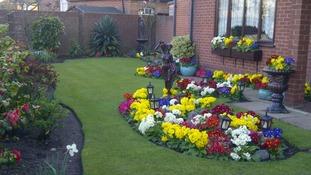 Spring flowers in a Norwich garden