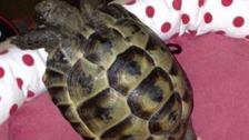 Edgar the stolen tortoise