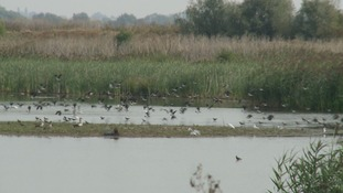 From quarry to nature reserve: The expansion of Ouse Fen